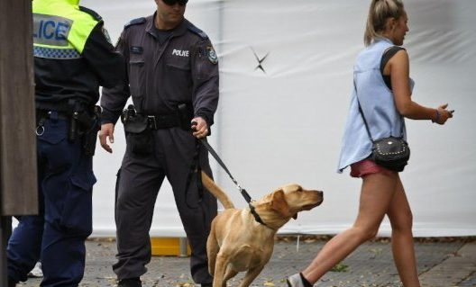Report: six people refused entry to Above and Beyond, sniffer dog backlash continues